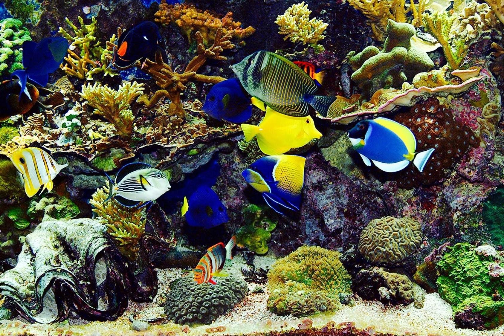 Ingin Memiliki Akuarium Air Laut Pahami Dulu 7 Hal Berikut