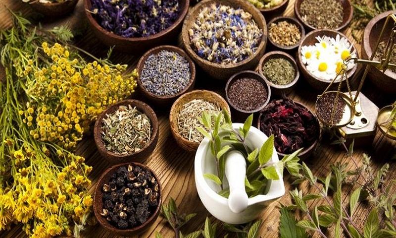diabetes de tanaman obat herbal untuk penyakit
